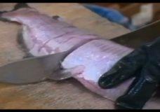 Chicago Slices, episode 9308