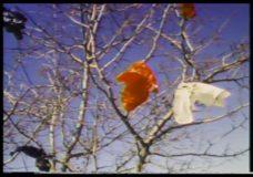 Image Union, episode 1331