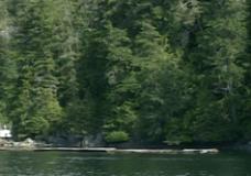 Spirits in the Wilderness #6: Salmon Original
