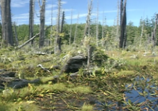 Spirits in the Wilderness raw: #13 Salmon Original