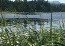 Spirits in the Wilderness raw: #18 Salmon Original, Roy interview pt. 4