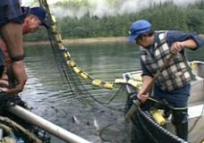 Spirits in the Wilderness raw: #9 Salmon Original